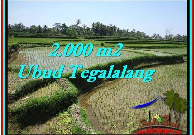 Exotic PROPERTY 2,000 m2 LAND IN Ubud Tegalalang FOR SALE TJUB529
