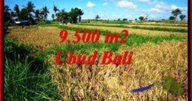 Magnificent PROPERTY 9,500 m2 LAND IN Sentral Ubud BALI FOR SALE TJUB548