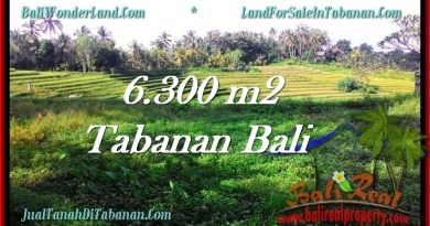 Beautiful PROPERTY Tabanan Selemadeg 6,300 m2 LAND FOR SALE TJTB275