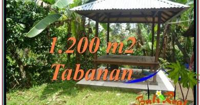 Beautiful PROPERTY 1,200 m2 LAND IN Tabanan Penebel FOR SALE TJTB294