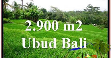 2,900 m2 LAND SALE IN UBUD TJUB564