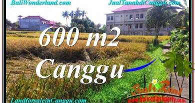 Affordable PROPERTY LAND FOR SALE IN Canggu Pererenan BALI TJCG211