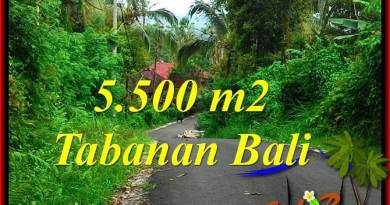 Magnificent LAND SALE IN TABANAN TJTB323