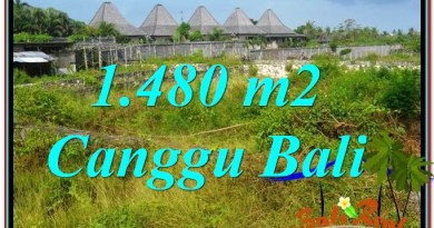 Magnificent LAND SALE IN Canggu Pererenan TJCG212