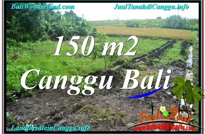 FOR SALE Beautiful LAND IN Canggu Pererenan TJCG213