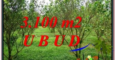 FOR SALE Magnificent 3,100 m2 LAND IN UBUD BALI TJUB593