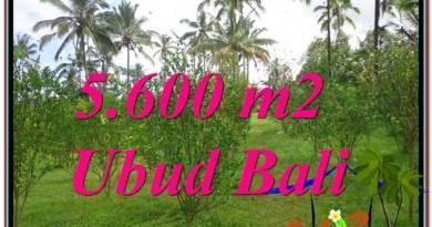 Exotic UBUD BALI 5,600 m2 LAND FOR SALE TJUB609