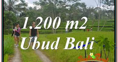 LAND FOR SALE IN Ubud Tegalalang BALI TJUB624