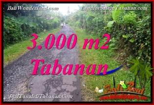 Beautiful 3,000 m2 LAND IN TABANAN FOR SALE TJTB366