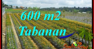 Beautiful PROPERTY LAND IN Tabanan Bedugul BALI FOR SALE TJTB372