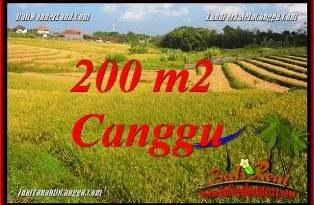 FOR SALE Magnificent 200 m2 LAND IN CANGGU TJCG228