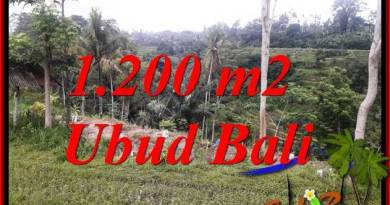 Magnificent Property 1,200 m2 Land in Ubud Tegalalang for sale TJUB699