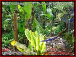 Beautiful PROPERTY LAND SALE IN UBUD TJUB415