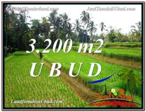 Affordable 3,200 m2 LAND SALE IN UBUD TJUB594