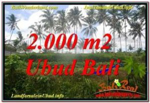 Exotic PROPERTY 2,000 m2 LAND FOR SALE IN Ubud Pejeng TJUB625