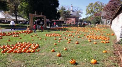 pumpkin patch at Harvest Days - photo by C. Benner
