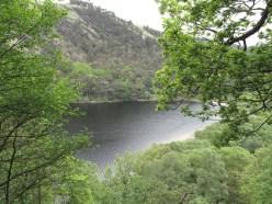 Derrybawn Woodland Trail