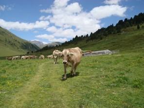 Auf der Alp Astras