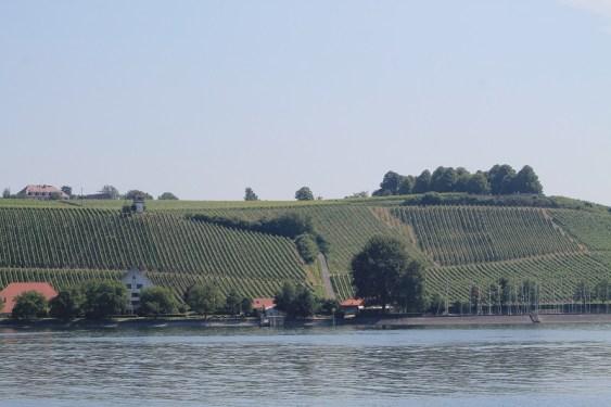Meersburg - Weinberge