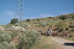 Ziegenhirte mitten in den Bergen Málagas