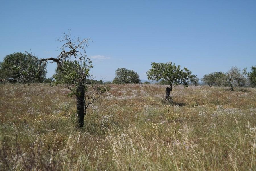 Traumstrand, Einsamkeit und Salzfelder am Südcap