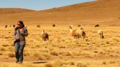 Hochebene Altiplano, Bolivien