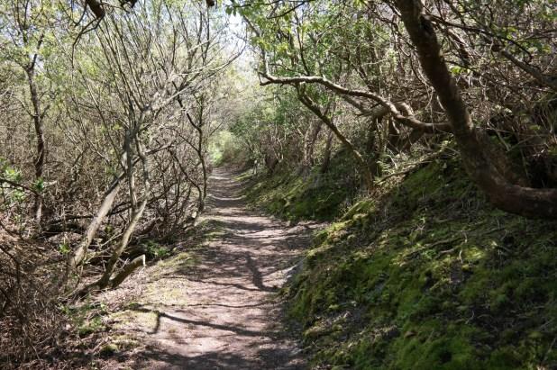 Der Weg durch den Zauberwald