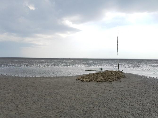Ein weiterer Watt-Reinigunger: die Sandklaffmuschel