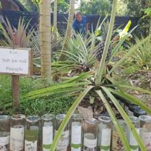 Koh Jum Beach Villas - Biogarten