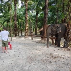 Landlinien_Top10_Krabi_Elephant_02