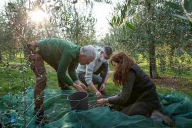 102-Olivenernte.Stommeln