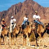 Camel trek safari Eilat, Israel