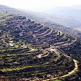 Biblical terraces in the Judean Hills near Jerusalem