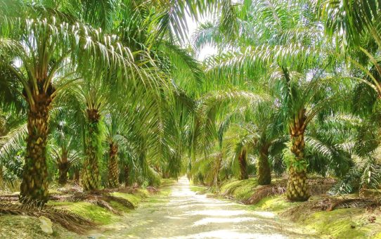 What Are The Things You Should Know About Agriculture land for sale in Malaysia?