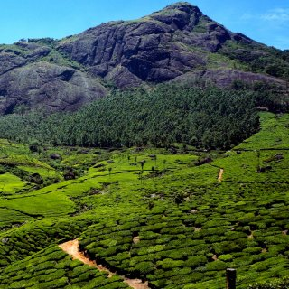 Vegan Traveler: Kerala, India