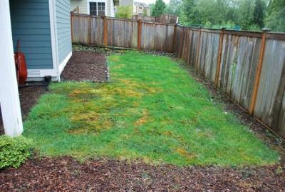 Landscape Design - Plants for Front and Backyards on Low Maintenance Backyard Design  id=67294