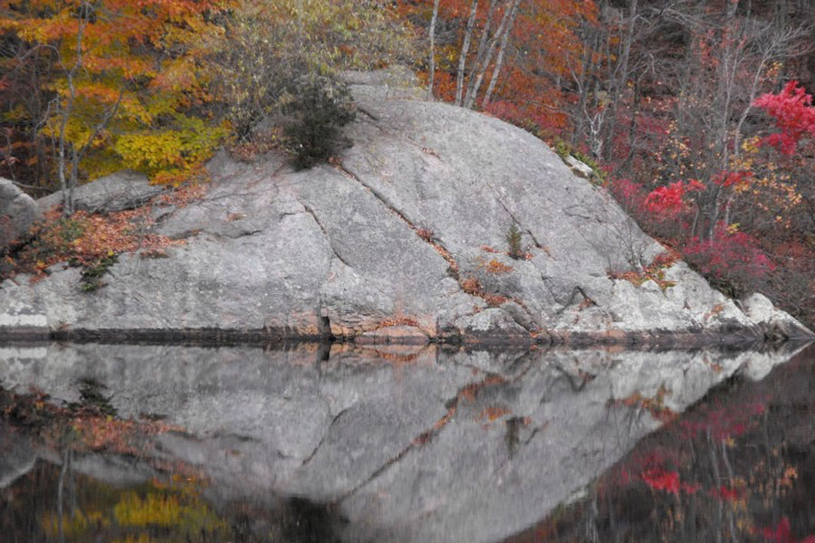 Landscape Elements Blog