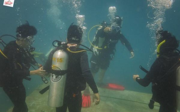 IMG 5334 - Selamat Datang di Bawah Laut