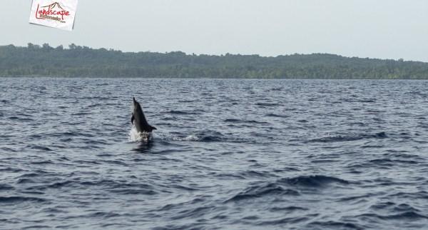 "lumba lumba mola wakatobi 09 - ""Berburu"" Lumba Lumba di Bajo Mola"