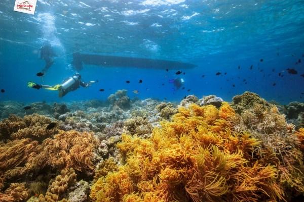tomia mari mabuk 22 1024x683 - Discovery Scuba Diving di Wakatobi