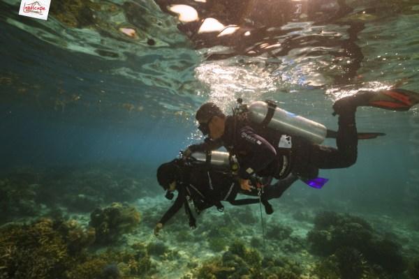 tryscuba wakatobi 02 1024x683 - Discovery Scuba Diving di Wakatobi
