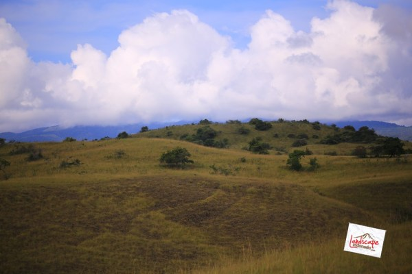 komodo d2 38 - Komodo Day 2 : Bertemu Komodo di Rinca