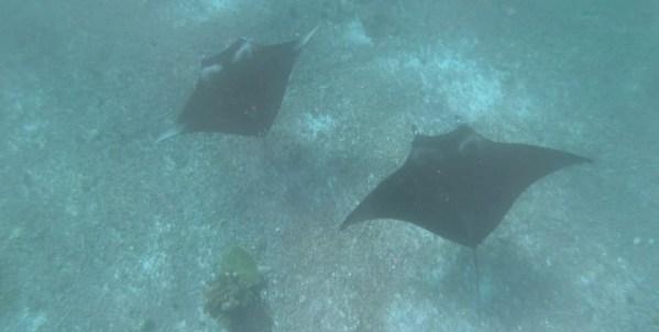 Screenshot 178 - Komodo | 3D2N | Snorkel trip