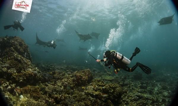 komodo 100 mantaalley 01 - Komodo Diving Log Day 100 : Ocean Full of Manta