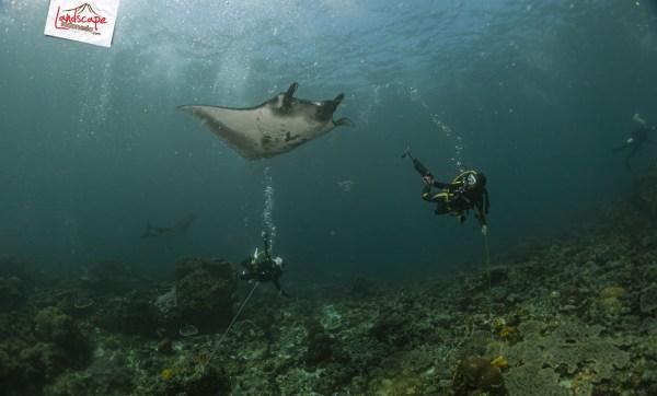 komodo 100 mantaalley 07 - Komodo Diving Log Day 100 : Ocean Full of Manta