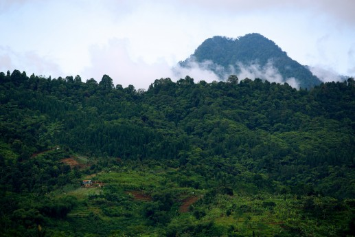 View of the Halimun-Salak National Park, West Java, Indonesia. Mokhamad Edliadi/CIFOR