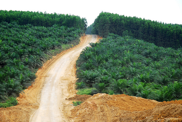 Oil palm plantations in Indonesia are controversial because of their contribution to deforestation