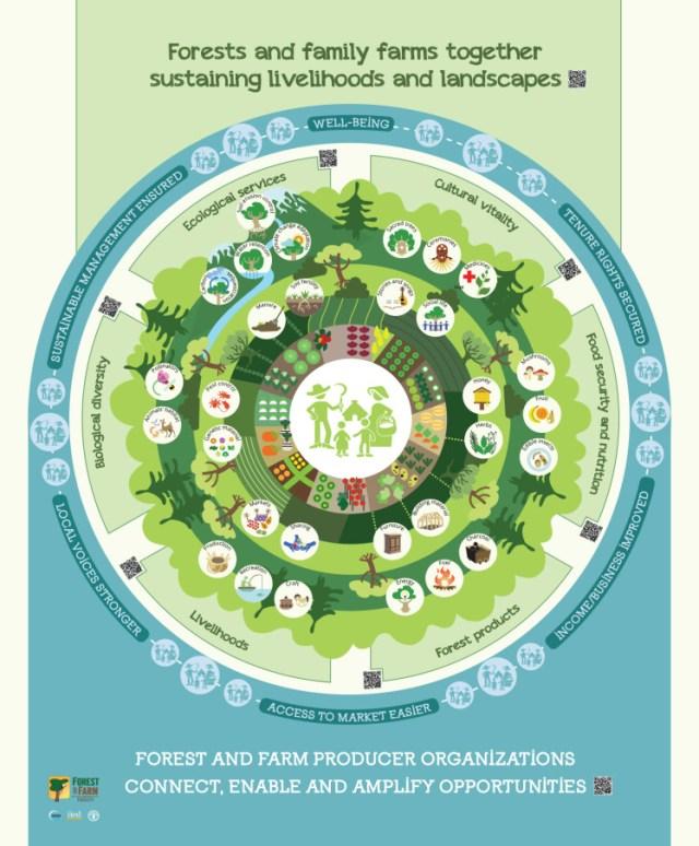 FAO-Infographic-ForestFarmFacility-en