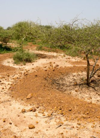 How do you stop the desert? Niger may have the answer