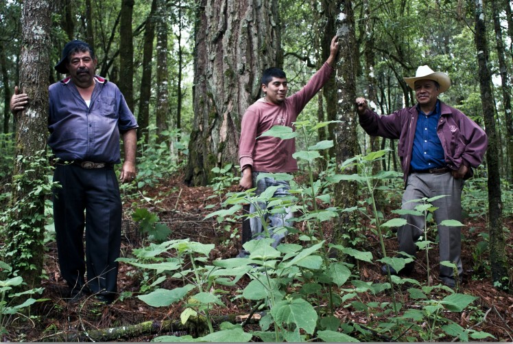 Ejidos and communities, the landholders in Mexico, conserve the natural resources to stop deforestation and forest degradation. Photo credit: Eugenio Fernández Vázquez.